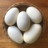 Яйце гусяче